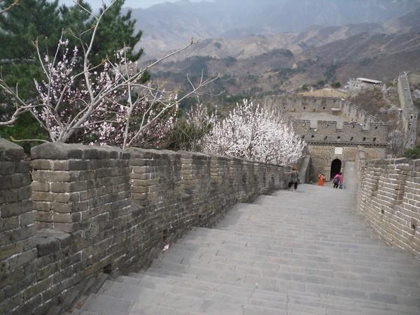 Tour et arbres en fleur sur la grande muraille de Chine à Mutianyu