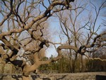 mini-arbre-parc-yuanmingyan