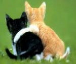 chats-amitie