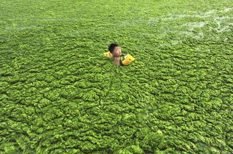 Enfant qui nage dans les algues